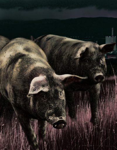 """""""Pigs on the way"""""""