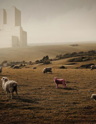sheep-2563722