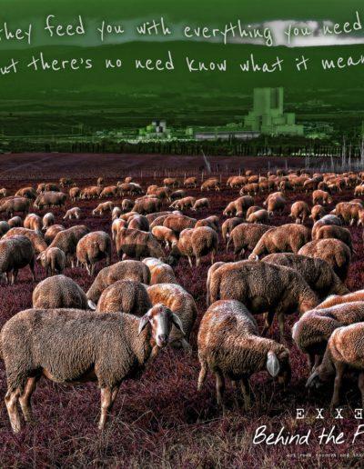 sheep-2859011
